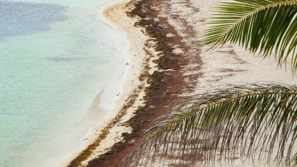 Bahia Honda State Park and Beach featuring general coastal views and a beach