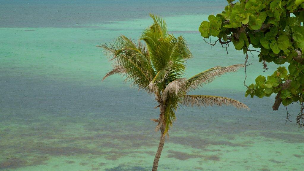 Bahia Honda State Park and Beach showing general coastal views and tropical scenes