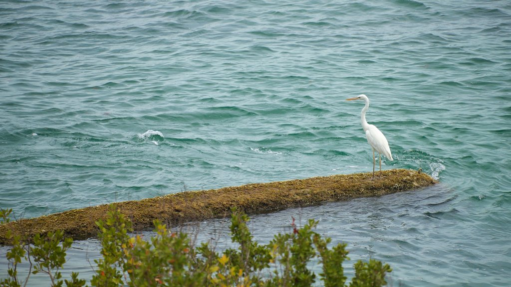 Bahia Honda State Park and Beach which includes general coastal views and bird life