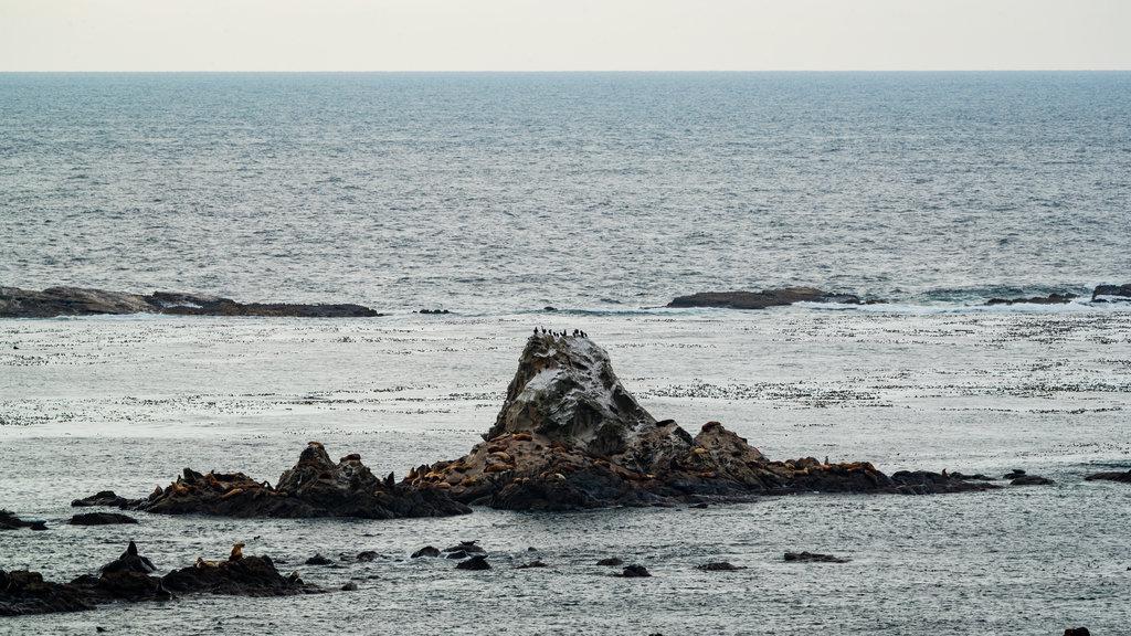 Cape Arago State Park which includes rocky coastline and general coastal views