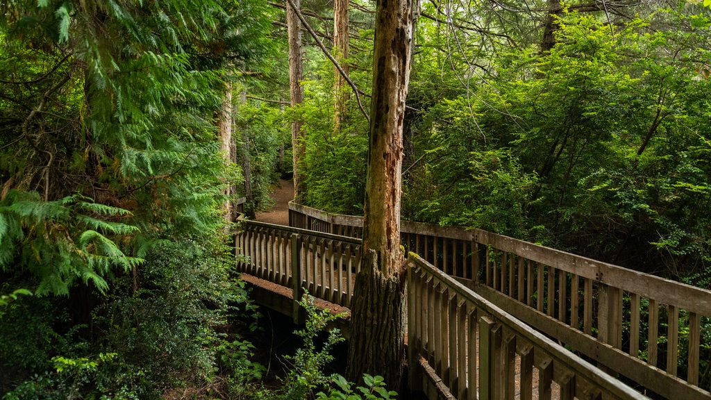 South Slough National Estuarine Research Reserve featuring forest scenes and a bridge