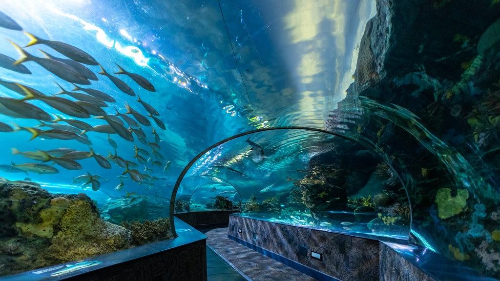 Ripley\'s Aquarium of the Smokies que incluye vida marina y vistas interiores