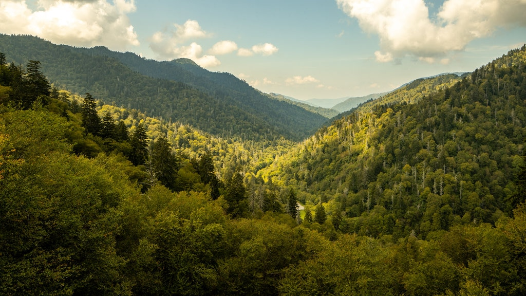 Great Smoky Mountains National Park featuring forest scenes, landscape views and tranquil scenes