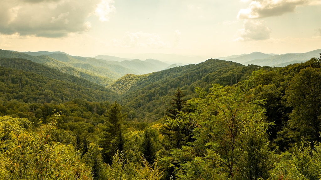 Great Smoky Mountains National Park showing a sunset, landscape views and tranquil scenes
