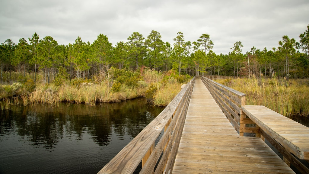 Gulf State Park showing wetlands and a bridge