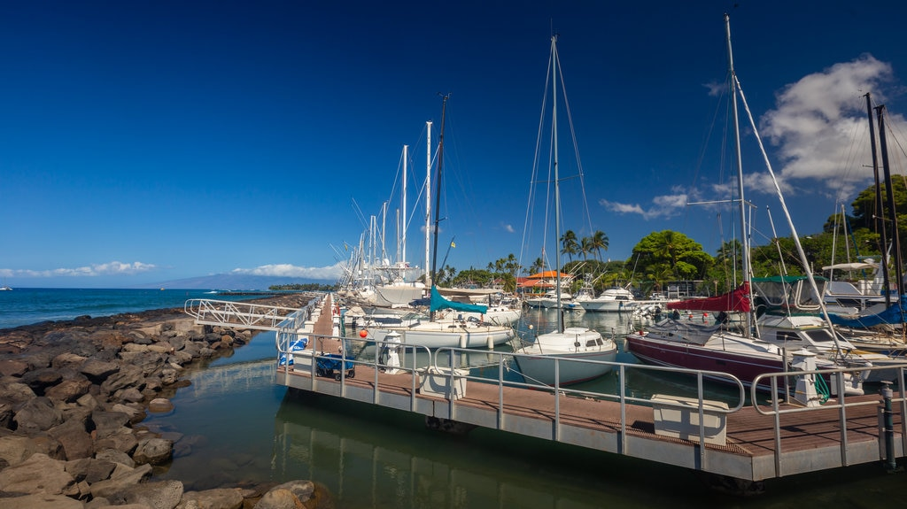 Lahaina showing a bay or harbor