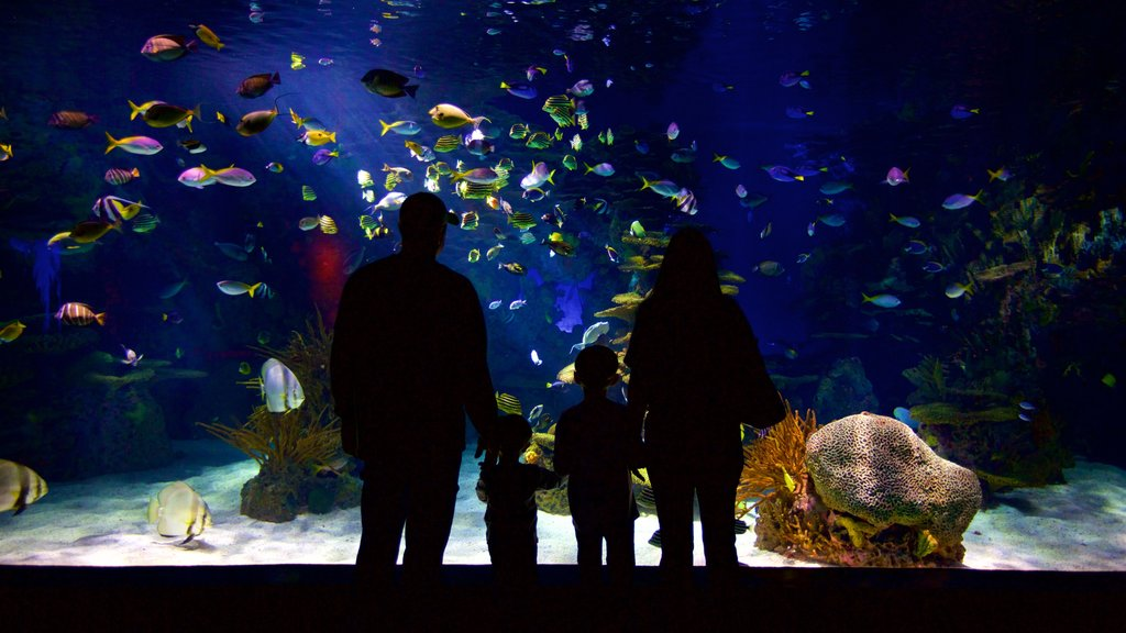 Ripley\'s Aquarium of the Smokies showing marine life and interior views as well as a family