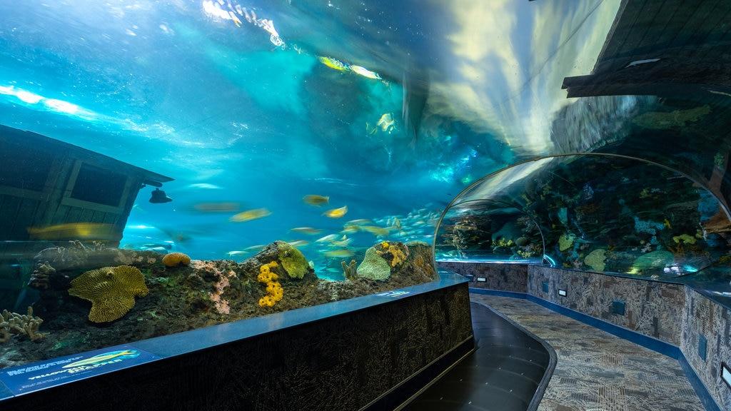 Ripley\'s Aquarium of the Smokies showing marine life and interior views
