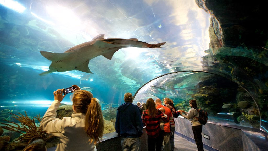 Ripley\'s Aquarium of the Smokies featuring marine life, interior views and dangerous animals