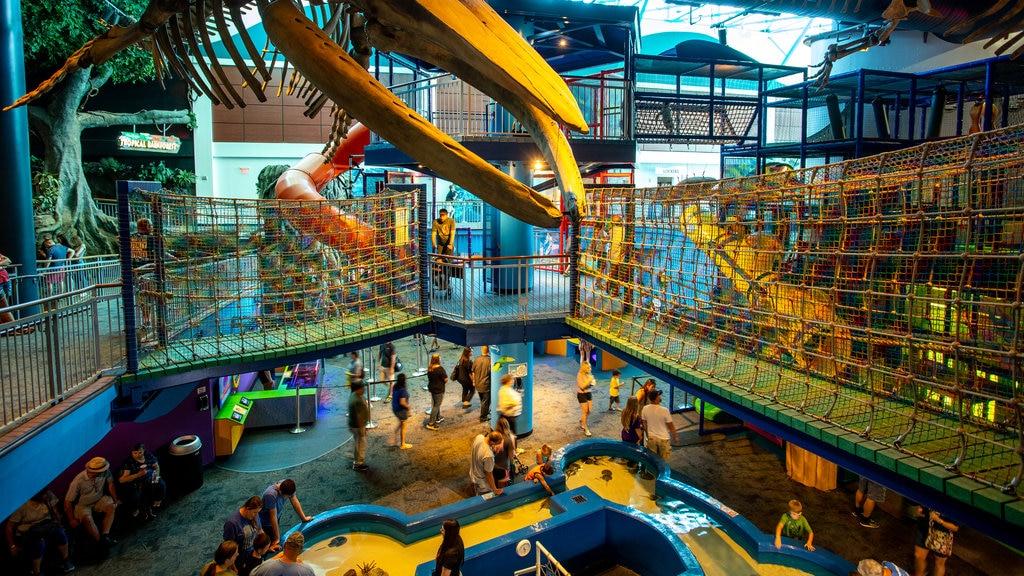 Ripley\'s Aquarium of the Smokies featuring marine life and interior views