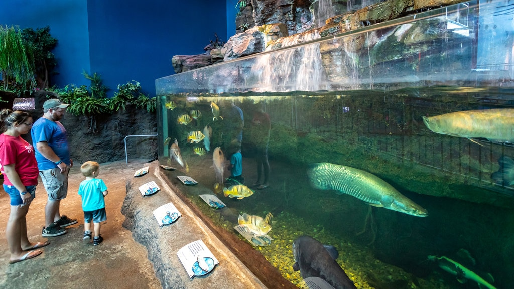 Ripley\'s Aquarium of the Smokies showing marine life as well as a family