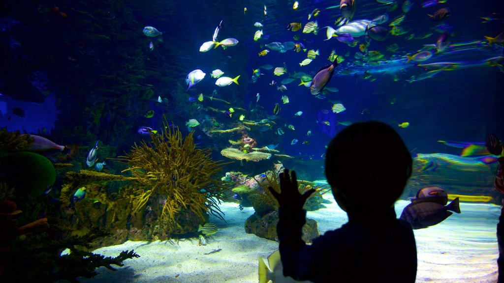 Ripley\'s Aquarium of the Smokies featuring marine life and interior views as well as an individual child