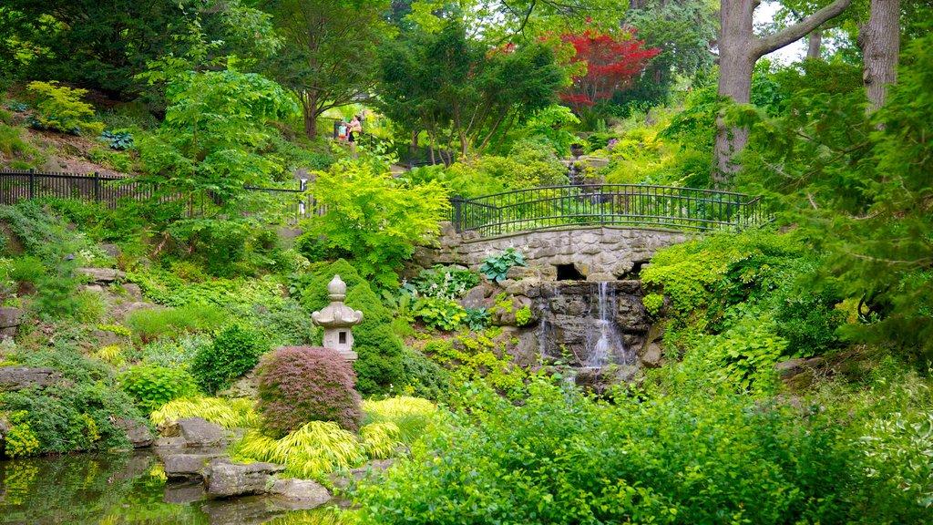 High Park mostrando un parque y un río o arroyo