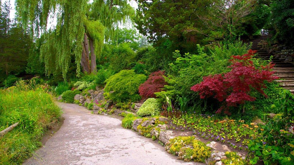 Edward Gardens que incluye un jardín