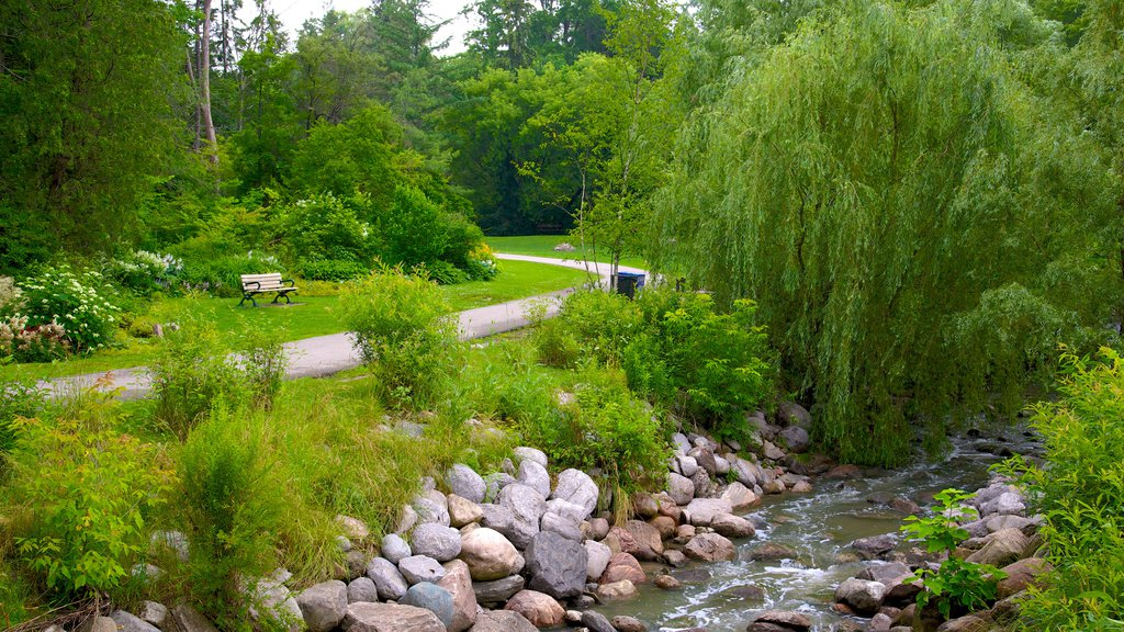 Edward Gardens showing a garden and a river or creek