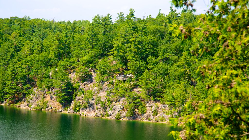 Gatineau Park showing forest scenes, a garden and a lake or waterhole