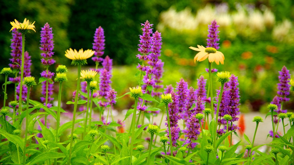 Jardín botánico de Toronto ofreciendo un jardín y flores