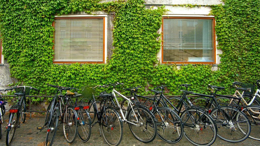 Aarhus City Hall featuring cycling
