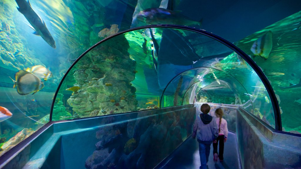 Aquatopia which includes interior views and marine life