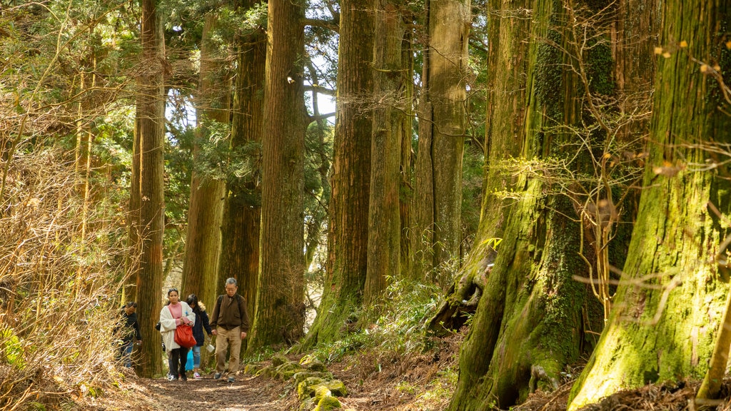 Hakone which includes forests, a garden and hiking or walking