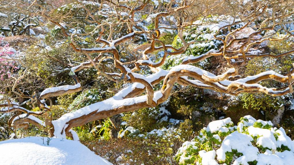 Hakone showing snow