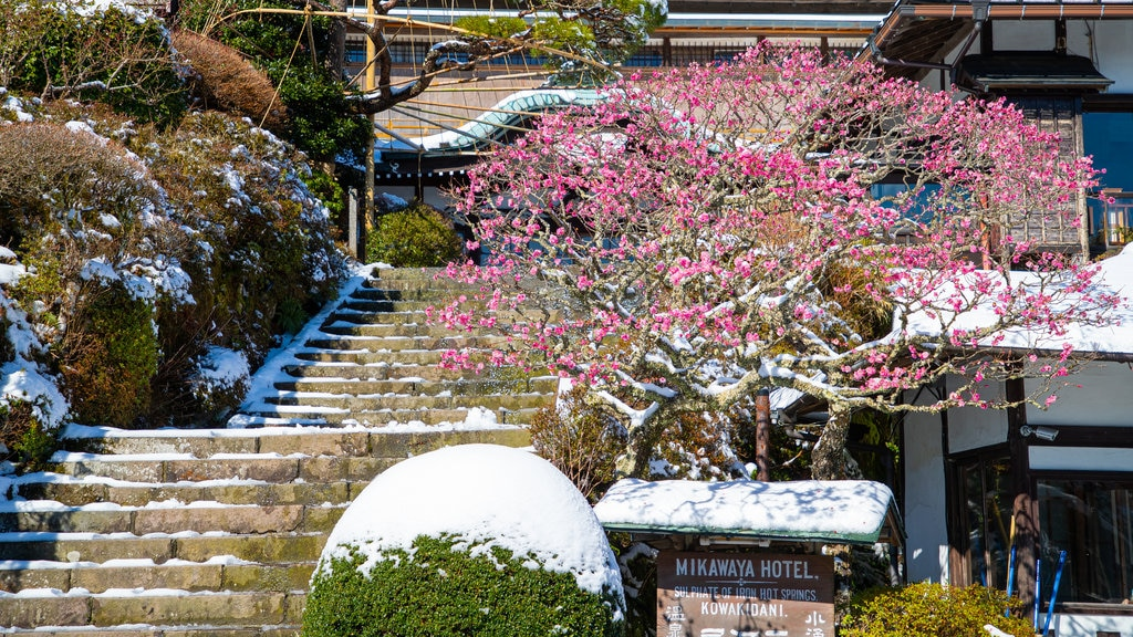 Hakone which includes wildflowers and snow