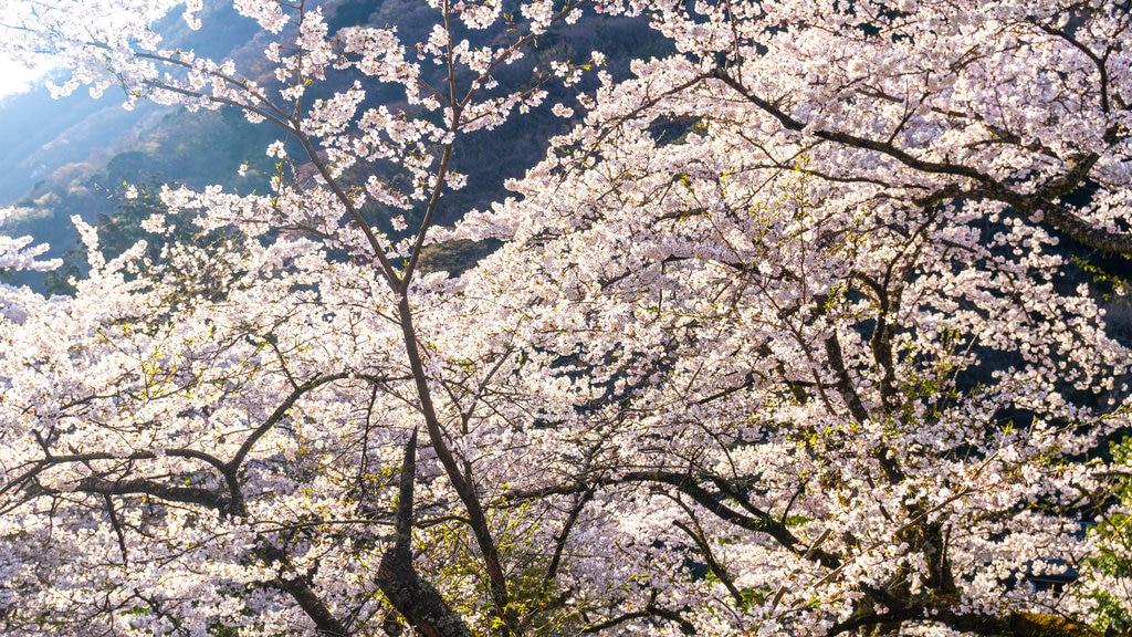 Hakone showing wildflowers