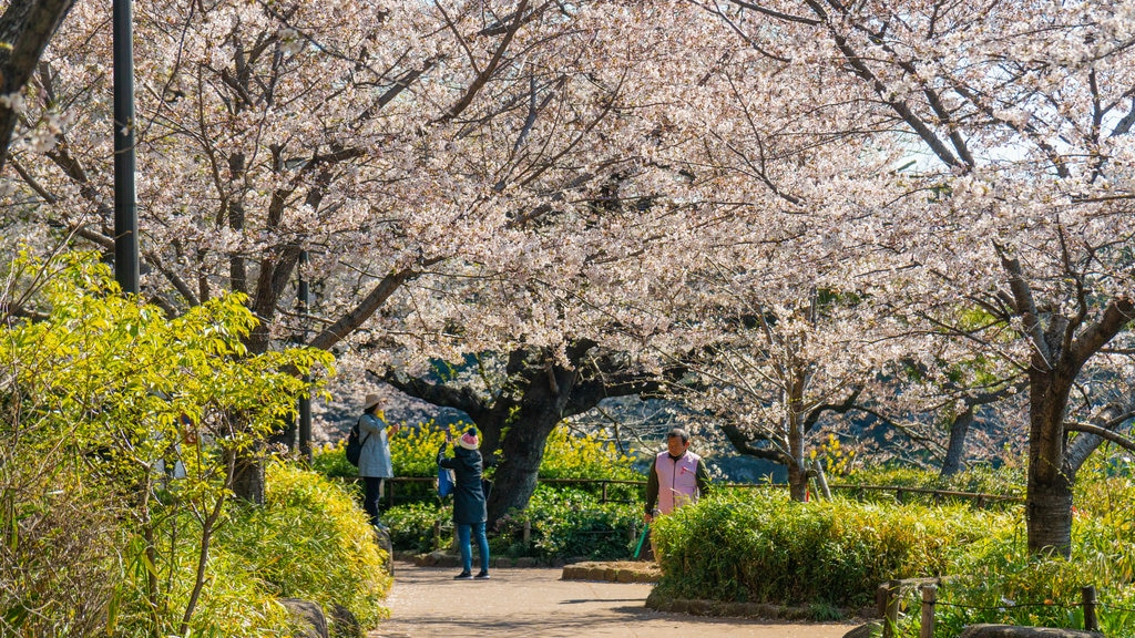 Chiyoda showing a park and wildflowers