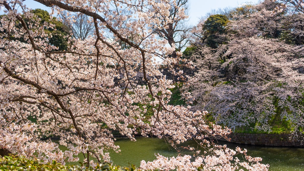 Chiyoda which includes a river or creek and wildflowers