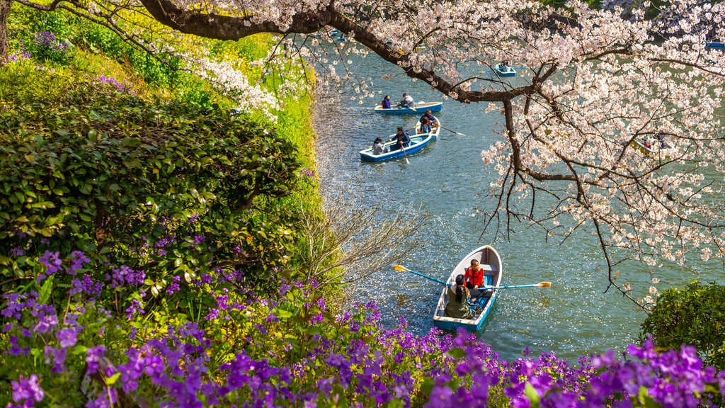 Chiyoda featuring wildflowers, a river or creek and kayaking or canoeing