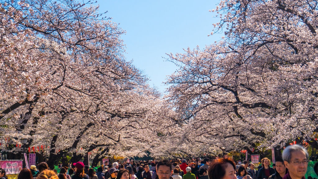 Ueno Park showing wildflowers as well as a large group of people