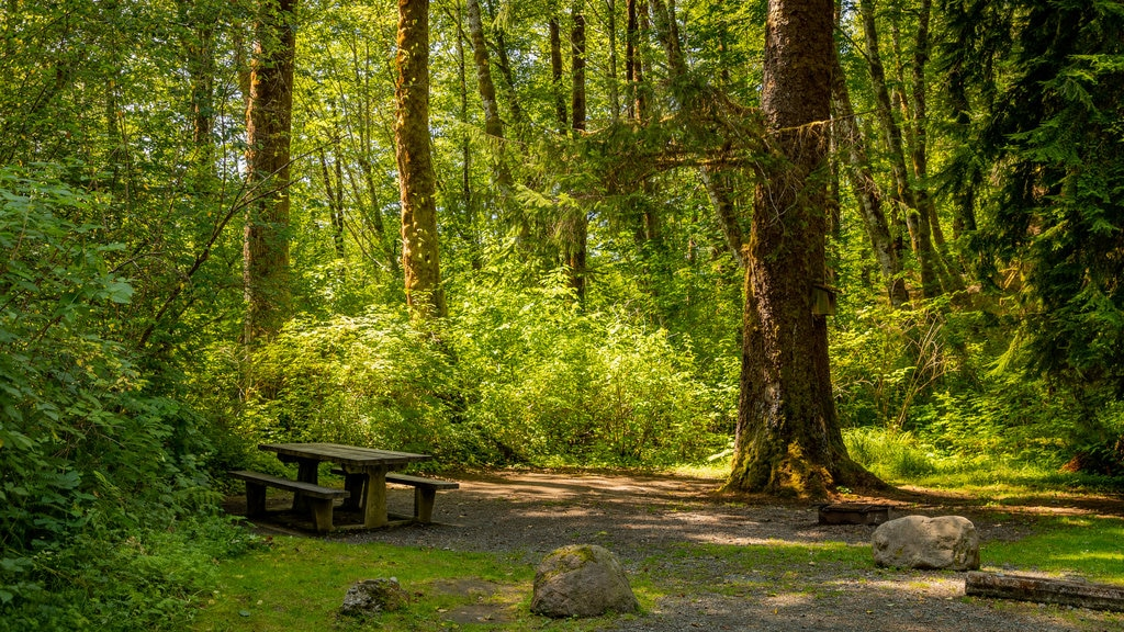 Bogachiel State Park which includes forest scenes and a park