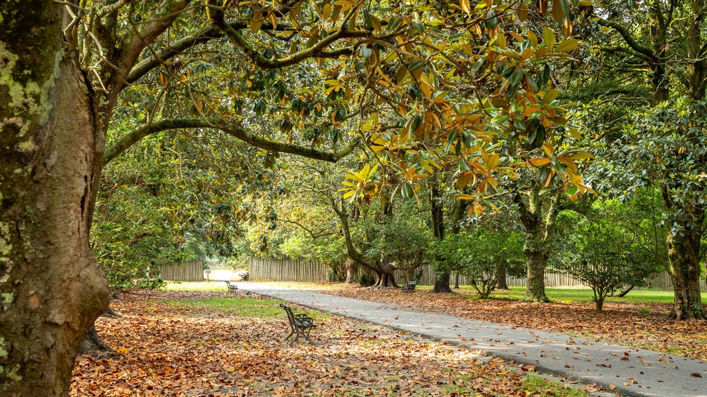 Charles Towne Landing mostrando hojas de otoño y un parque