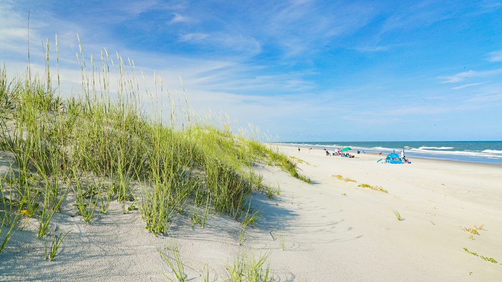 Coastal South Carolina showing general coastal views and a sandy beach