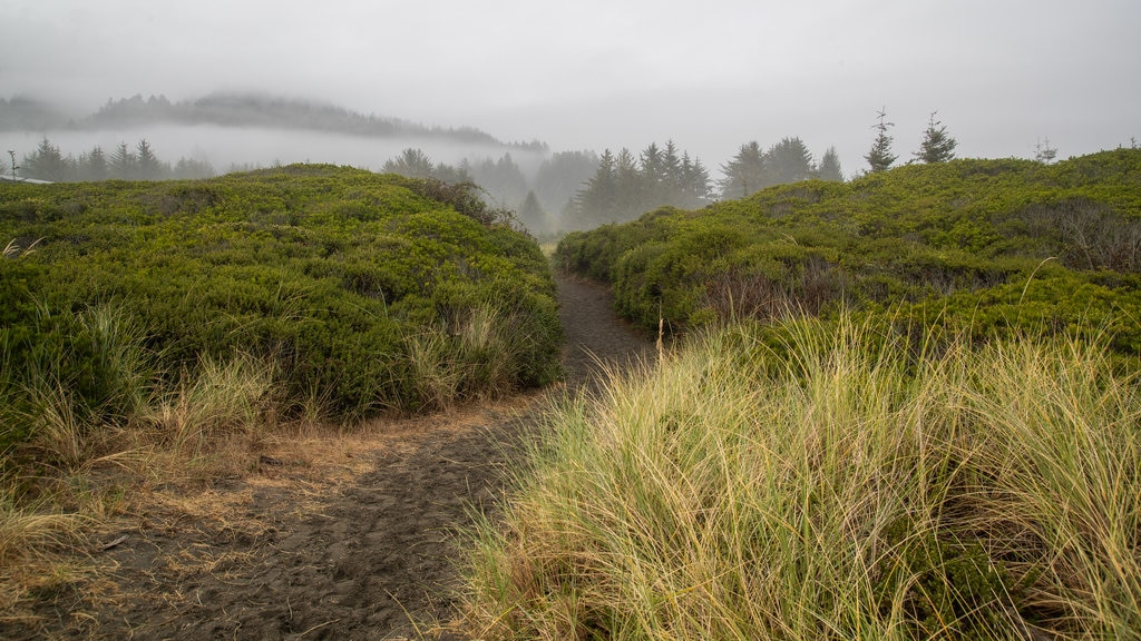 Crissey Field State Park featuring mist or fog and tranquil scenes