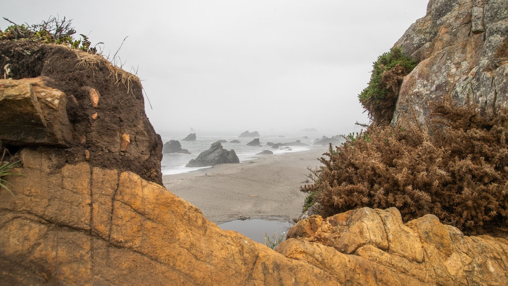 Harris Beach State Park which includes mist or fog, general coastal views and rocky coastline