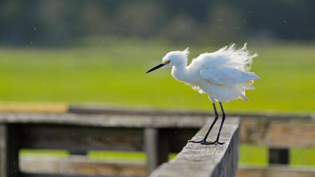 Parque estatal de Huntington Beach que incluye vida de las aves