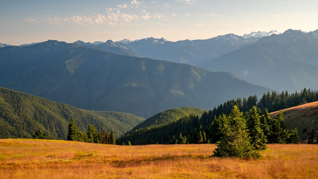 Hurricane Ridge showing a sunset, tranquil scenes and landscape views
