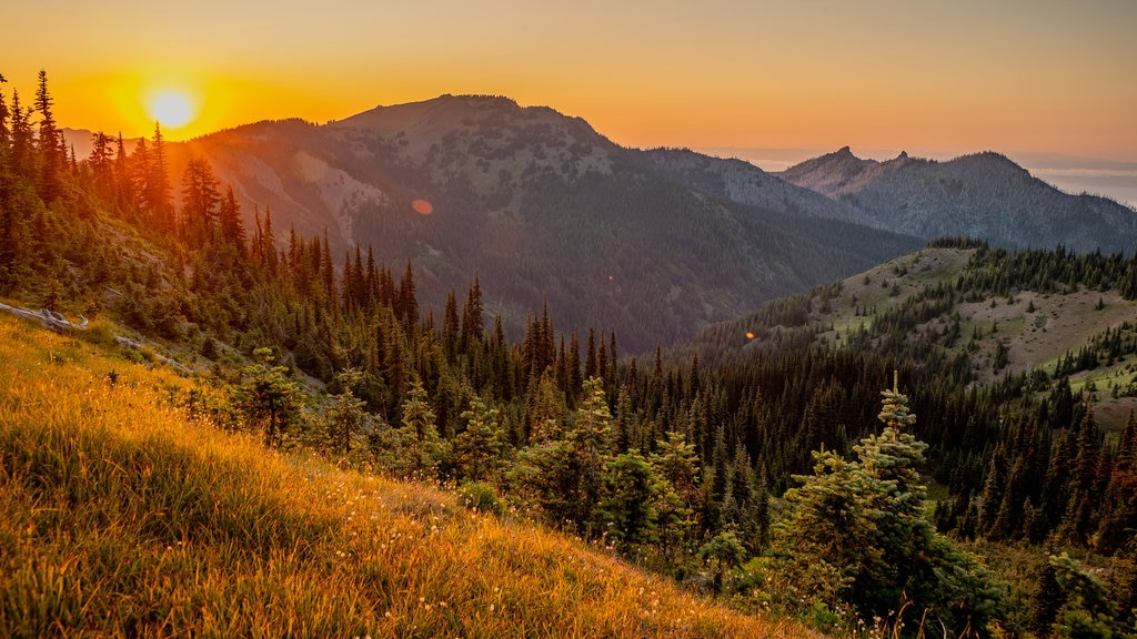 Hurricane Ridge showing landscape views, a sunset and tranquil scenes