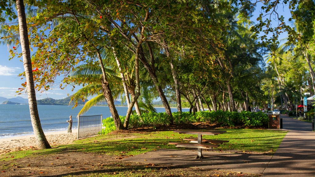 Palm Cove showing general coastal views
