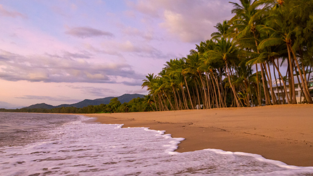 Palm Cove Beach which includes tropical scenes, a sunset and a sandy beach