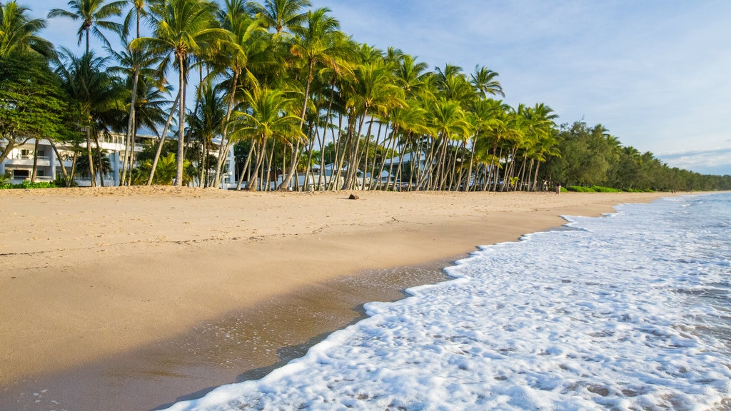Palm Cove Beach which includes tropical scenes, a beach and general coastal views