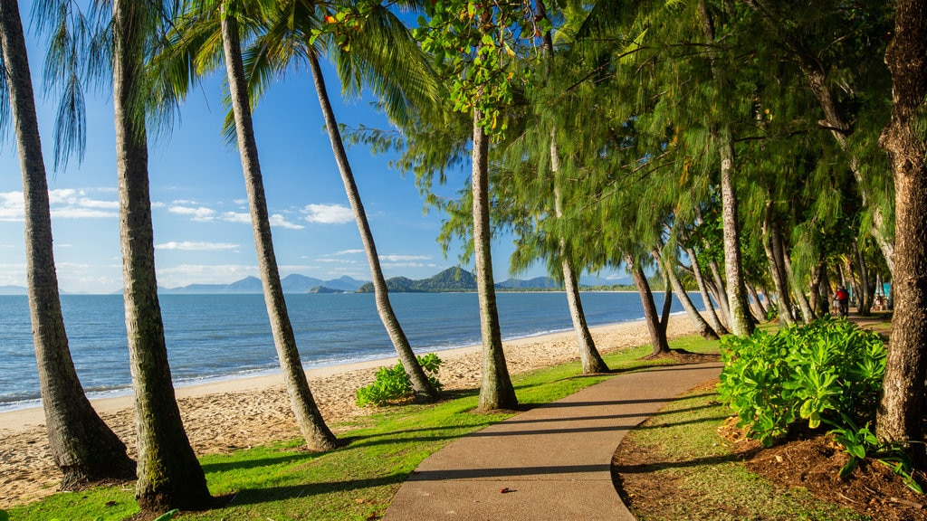 Palm Cove featuring a beach, general coastal views and tropical scenes