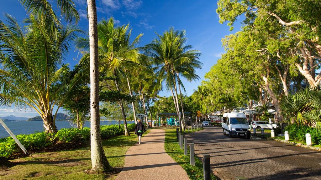 Palm Cove which includes general coastal views and tropical scenes