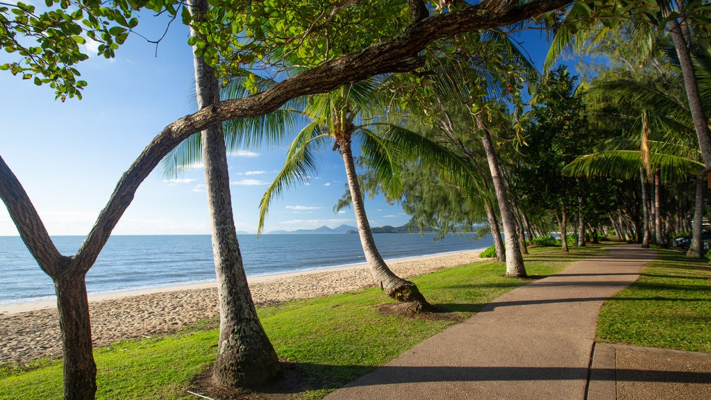 Palm Cove featuring general coastal views, a beach and tropical scenes