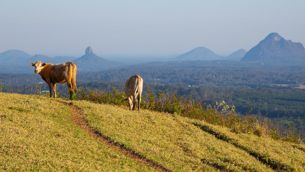 Maleny featuring farmland, land animals and tranquil scenes