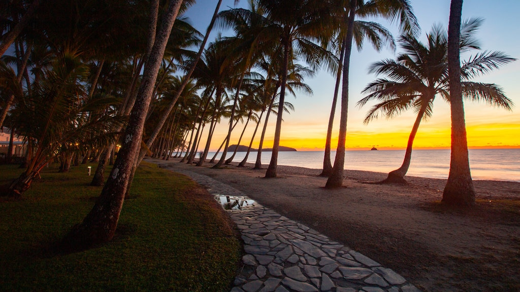 Palm Cove Beach featuring a sunset, general coastal views and tropical scenes