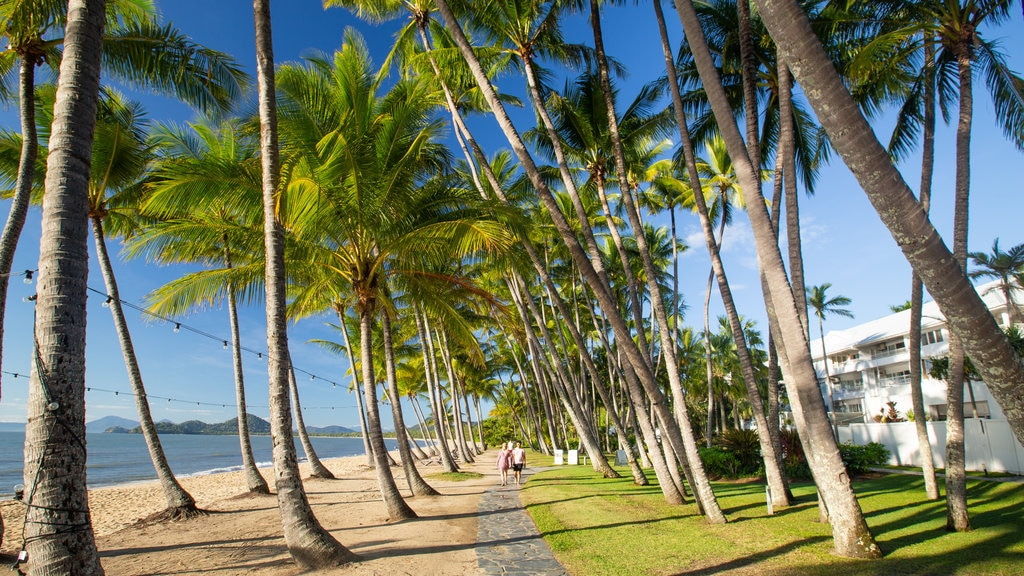 Palm Cove Beach showing tropical scenes and a beach