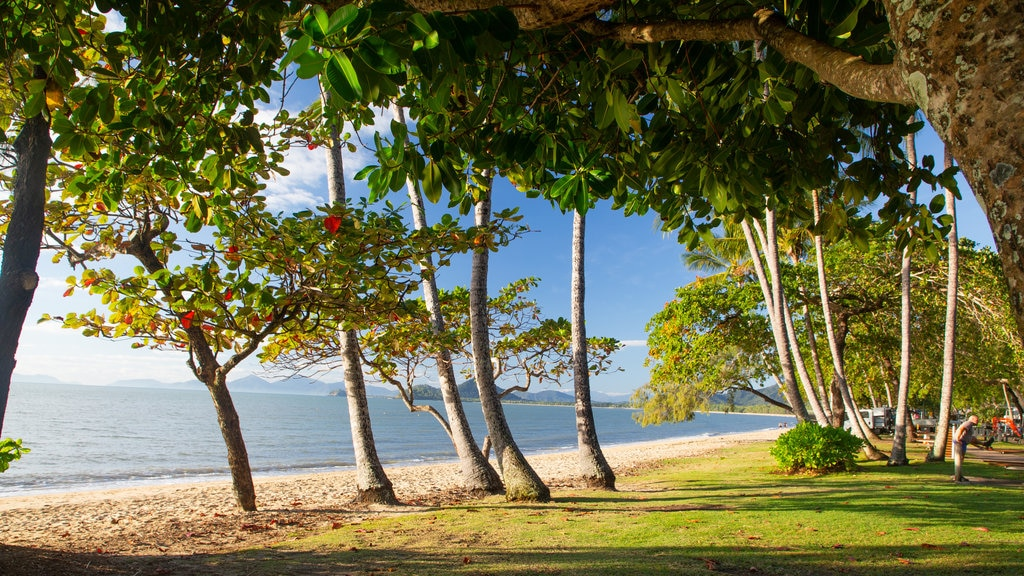 Palm Cove which includes a park and general coastal views