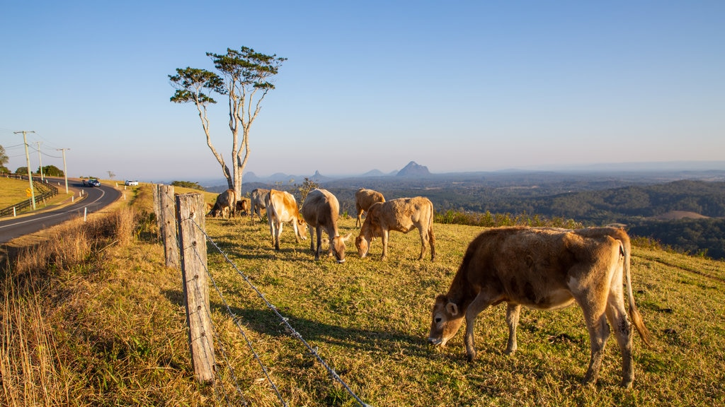 Maleny featuring farmland, a sunset and tranquil scenes
